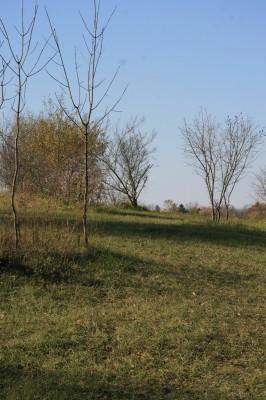 Mary Beth Doyle Park, Main course, Hole 9 Long approach