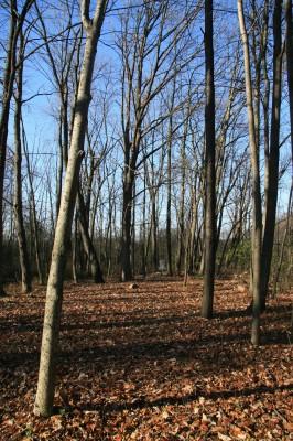 Mary Beth Doyle Park, Main course, Hole 7 Long approach