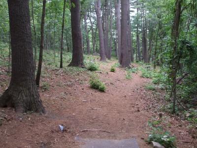Newton Hill, Main course, Hole 5 Tee pad