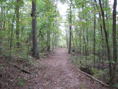 Little Creek Park, Main course, Hole 7 Tee pad