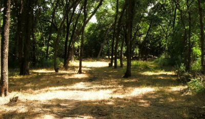 Gateway Park, West (The Privy), Hole 8 Long approach