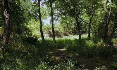 Gateway Park, West (The Privy), Hole 12 Long approach