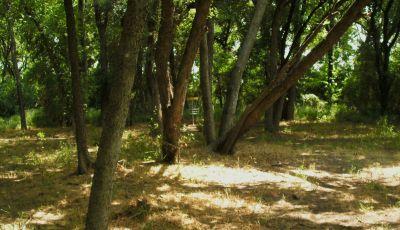 Gateway Park, West (The Privy), Hole 7 Short approach