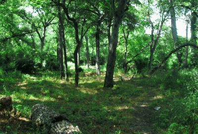 Gateway Park, West (The Privy), Hole 14 Long approach