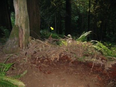 Seven Acres of Trees, Main course, Hole 7