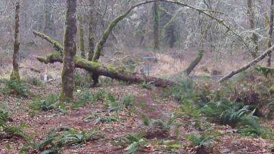Camp Taloali, Jerry Miller DGC, Hole 15 Short approach