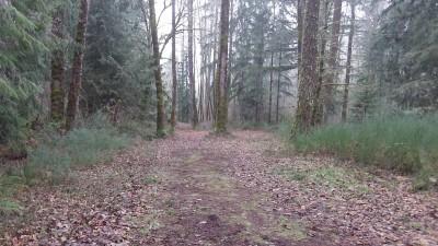 Camp Taloali, Jerry Miller DGC, Hole 12 Tee pad