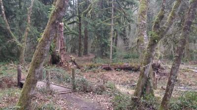 Camp Taloali, Jerry Miller DGC, Hole 16 Tee pad