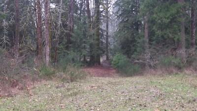 Camp Taloali, Jerry Miller DGC, Hole 11 Midrange approach