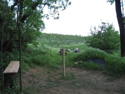 Poor House Farm Park, Main course, Hole 11 Alternate pin (reverse)