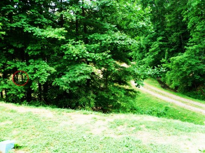 Camp Rockmont for Boys, Camp Rockmont Disc Golf Course , Hole 15 Tee pad