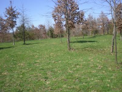 Boettler Park, Boettler park, Hole 7 Tee pad