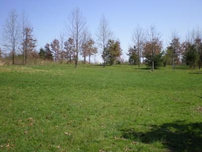 Boettler Park, Boettler park, Hole 8 Tee pad