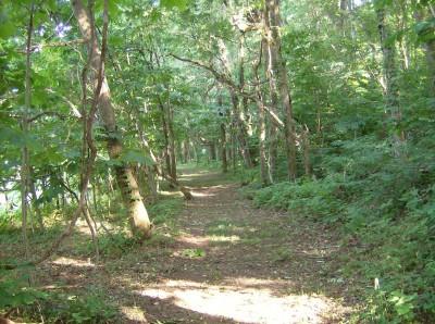 The Shire, Main course, Hole 5 Tee pad