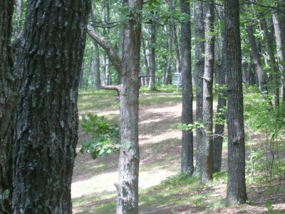 Hanson Hills Recreation Area, Grayling Rotary DGC, Hole 7 Long approach