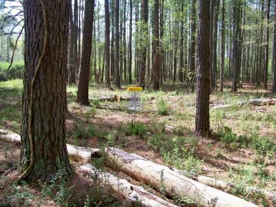 Mathews Park, Main course, Hole 7 Putt