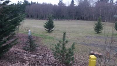 Twin Cedars DGC, Main course, Hole 8 Midrange approach