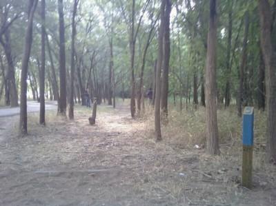 McKinney Park, Main course, Hole 5 Tee pad