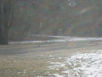 Cedarvale Park, Main course, Hole 2 Midrange approach