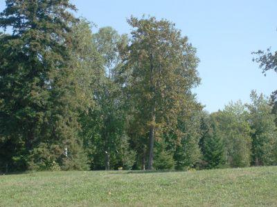 Birch Point Park, Main course, Hole 2 Midrange approach