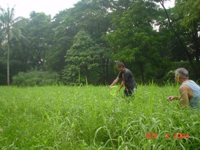 University of the Philippines, Sunken Garden, Hole 4 Midrange approach