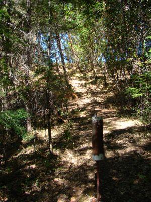 Barnyard, Main course, Hole 7 Reverse (back up the fairway)