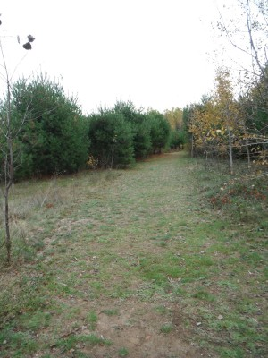Cadyville Recreation Park, Cadyville DGC, Hole 14 Long approach