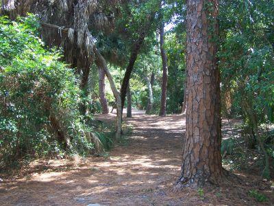 Maximo Park, Main course, Hole 4 Long tee pad