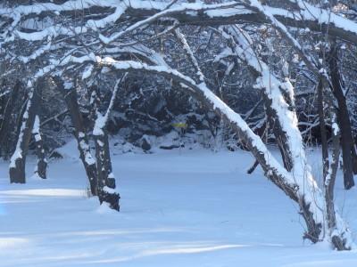 Rock Creek, Winter course, Hole 14
