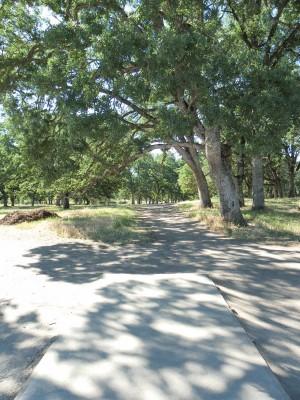 Rocklin Disc Golf Course, Main course, Hole 7 Tee pad