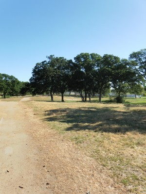 Rocklin Disc Golf Course, Main course, Hole 1 Midrange approach