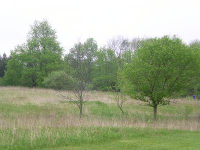 Burchfield Park, Devil's Den, Hole 6 Long approach