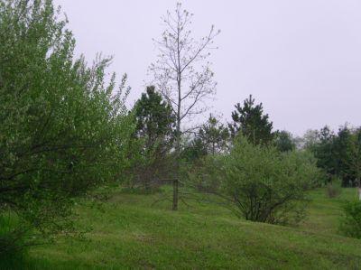 Burchfield Park, Devil's Den, Hole 12 Midrange approach