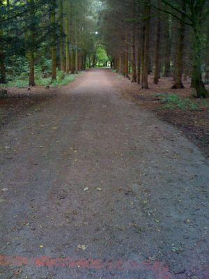 Sloterpark, Main course, Hole 4 Tee pad