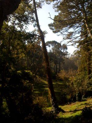 Golden Gate Park, Main course, Hole 15 Tee pad