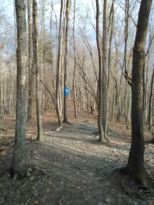 The Flying Squirrel DGC, Main course, Hole 7