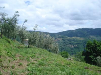 Fattoria di Pietrabuona, Tuscany Disc Golf, Hole 4 Middle tee pad