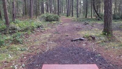 Shelton Springs DGC, Main course, Hole 9 Short tee pad