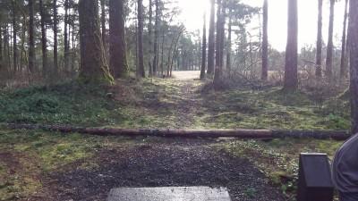 Shelton Springs DGC, Main course, Hole 7 Long tee pad