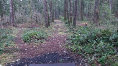 Shelton Springs DGC, Main course, Hole 5 Long tee pad