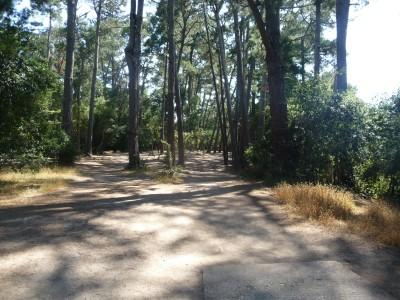 DeLaveaga Park, Main course, Hole 10 Tee pad