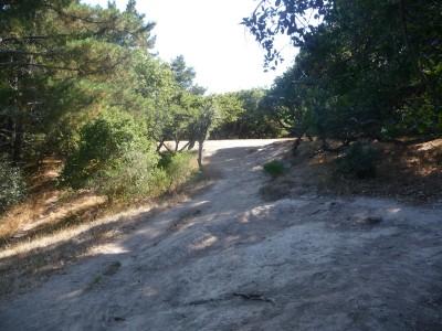 DeLaveaga Park, Main course, Hole 15 Tee pad