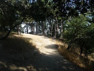 DeLaveaga Park, Main course, Hole 21 Tee pad
