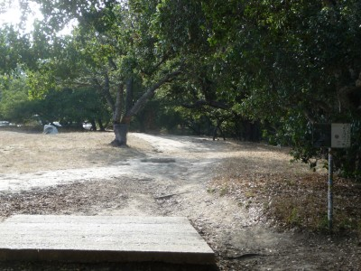DeLaveaga Park, Main course, Hole 24 Tee pad