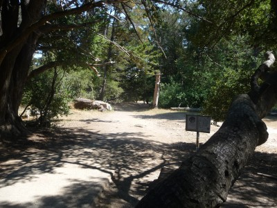 DeLaveaga Park, Main course, Hole 8 Tee pad