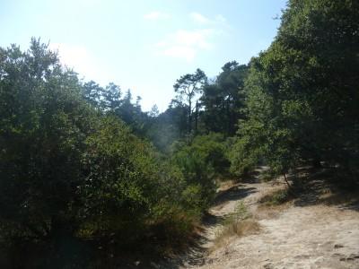 DeLaveaga Park, Main course, Hole 16 Tee pad