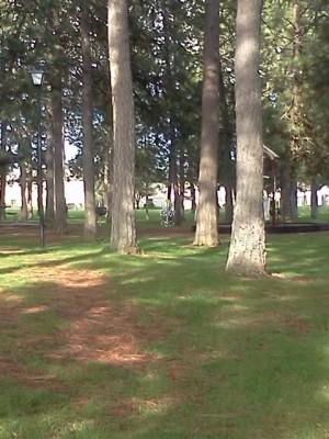 Salnave Park, Reitan DGC, Hole 2 Tee pad