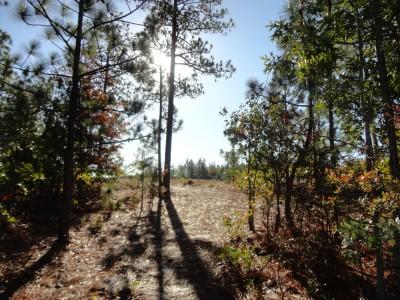 University of South Carolina - Aiken, Main course, Hole 9 Tee pad
