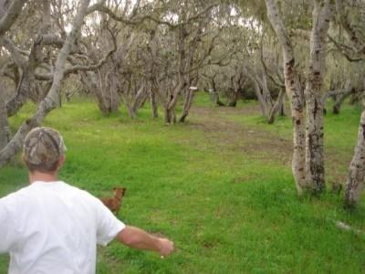 CSUMB Oaks Course, Main course, Hole 6 Short approach
