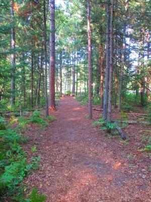 Hanson Hills Recreation Area, Grayling Rotary Pine Knoll DGC, Hole 2 Long tee pad